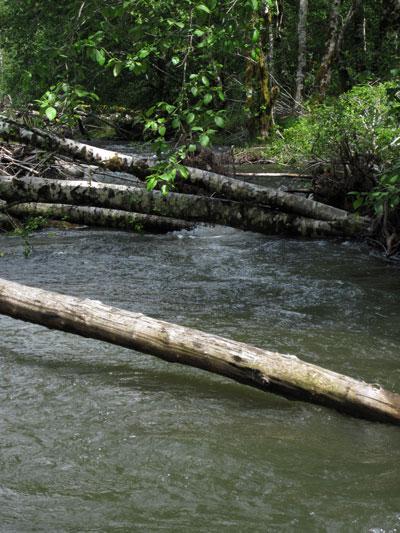 salmonberryriver